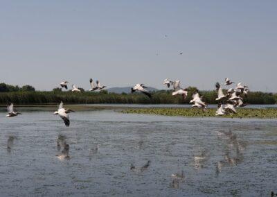 activitati in natura din delta dunarii cu barca